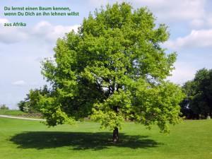 Baum mit afrikanischer Weisheit