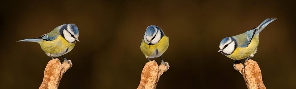 Vortrag – Tierbeobachtung, Wahrnehmung und Vogelsprache