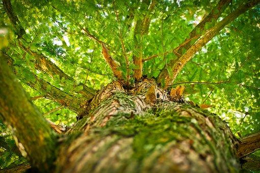 Achtsamkeit im Wald – über die Praxis des Waldbadens