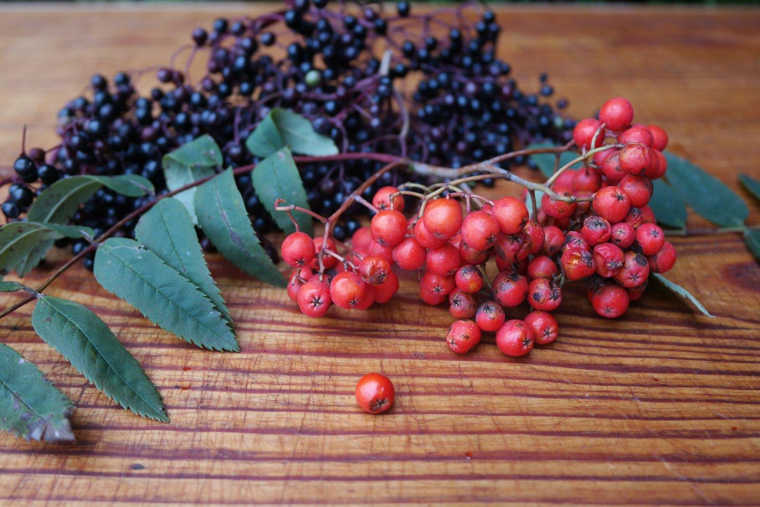 Kräuterwanderung – Herbst – Wilde Beeren